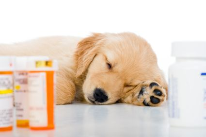 pet-medication