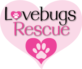 lovebugslogoheart