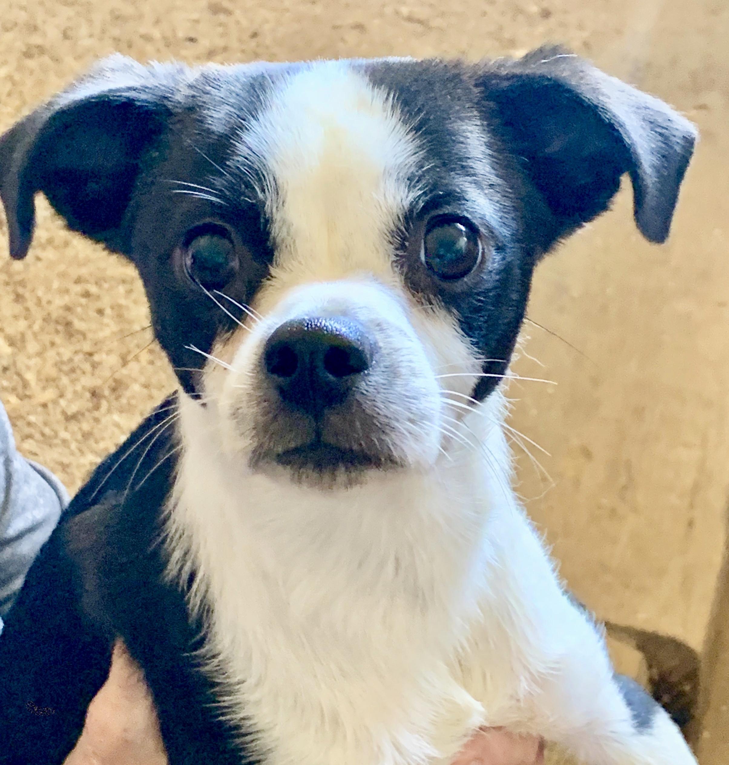 Adoptable Pets – Lovebugs Rescue